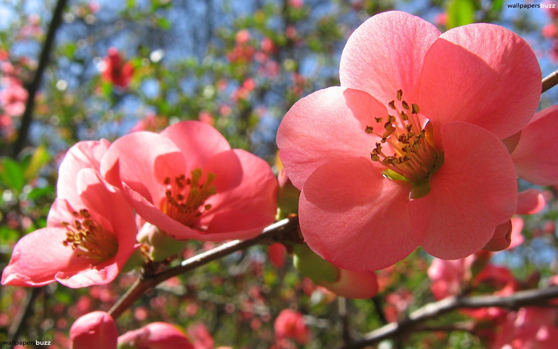 Beautiful pink spring flowers are depicted in this picture. We know that  spring is a season when everything wakes up, flowers and plants are not  exceptions.