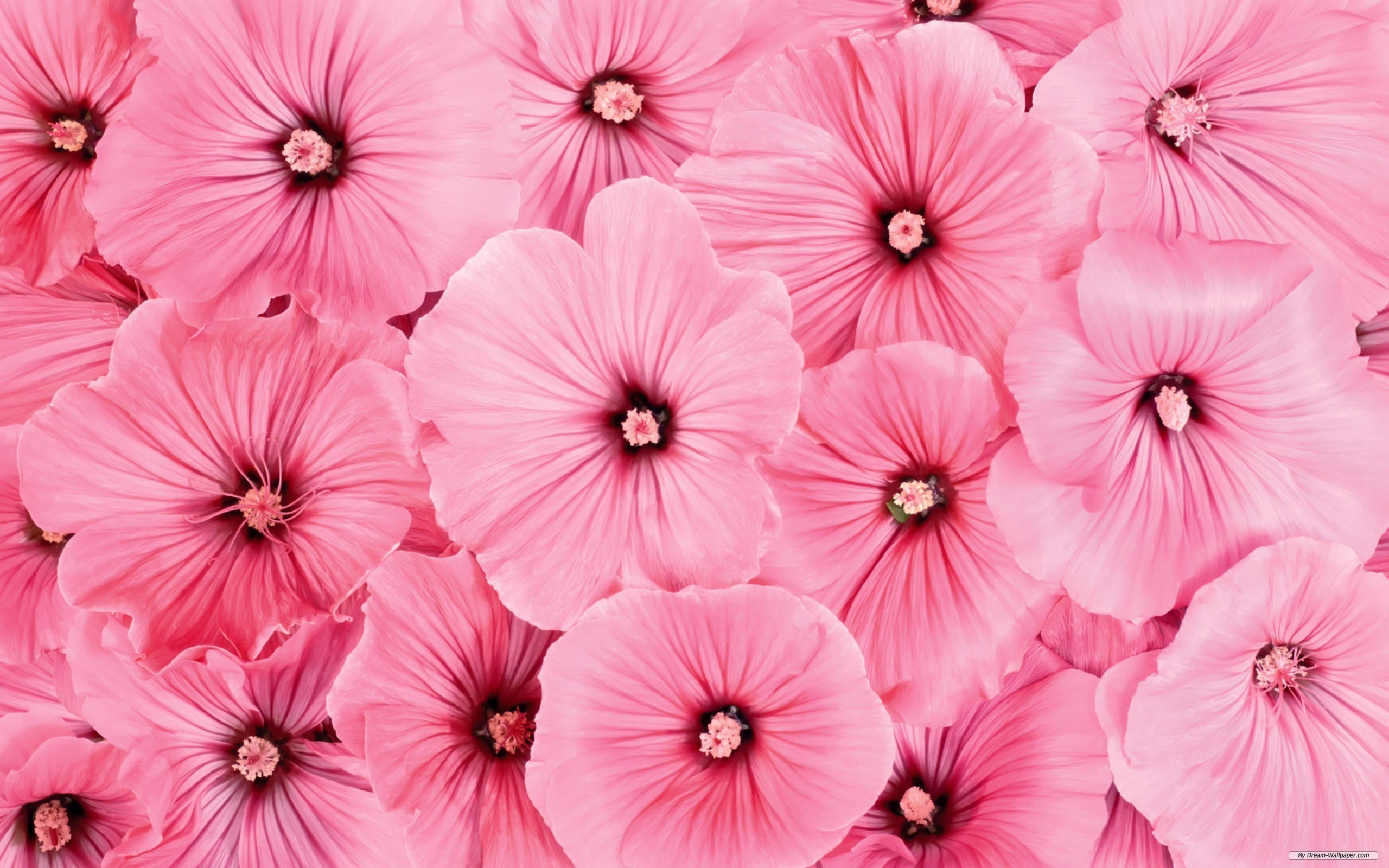 Pink Flowers Backgrounds (PC, Mobile, Gadgets) Compatible | px