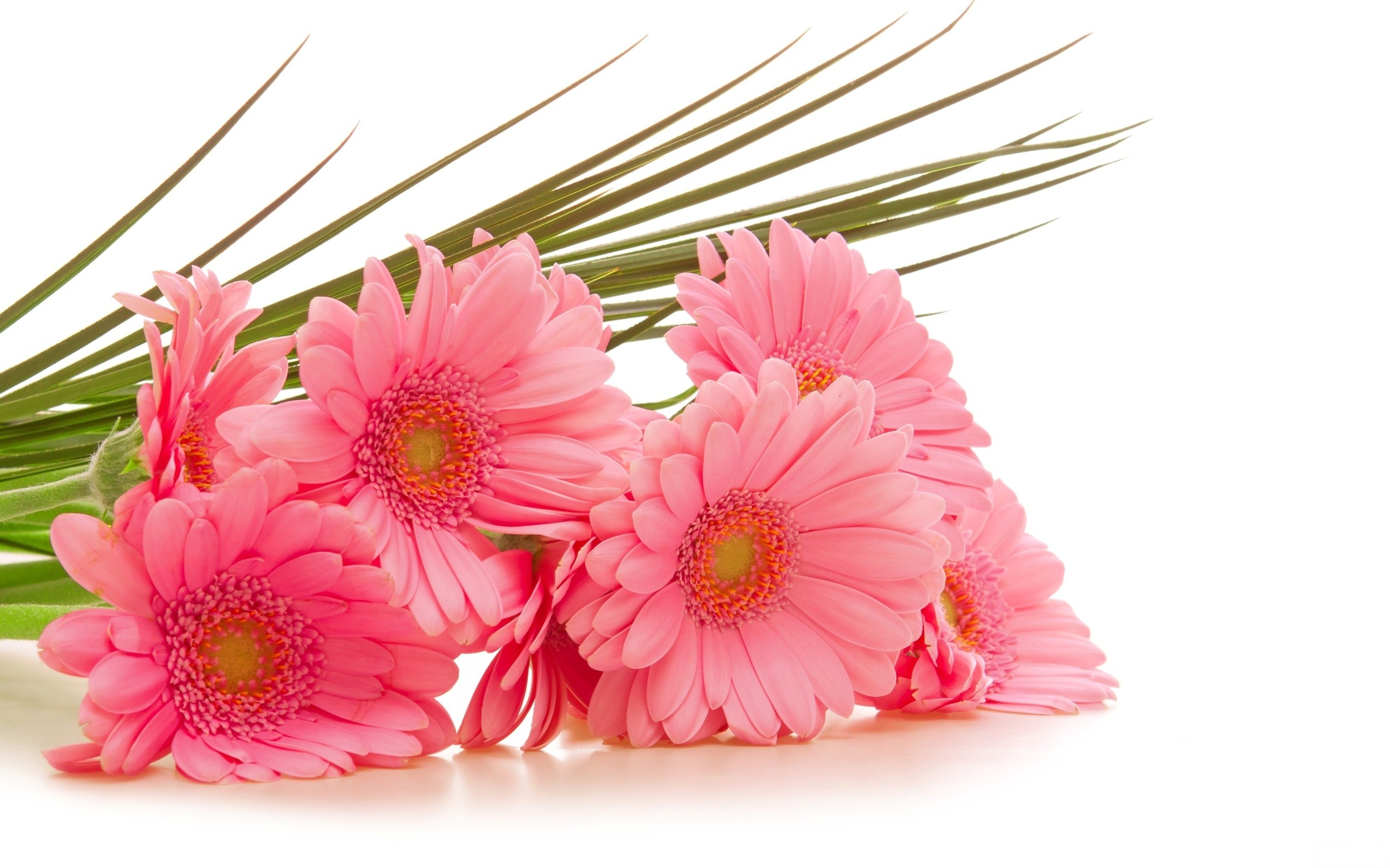 wallpaper.wiki-Pink-Flowers-Image-2560×1600-1-PIC-