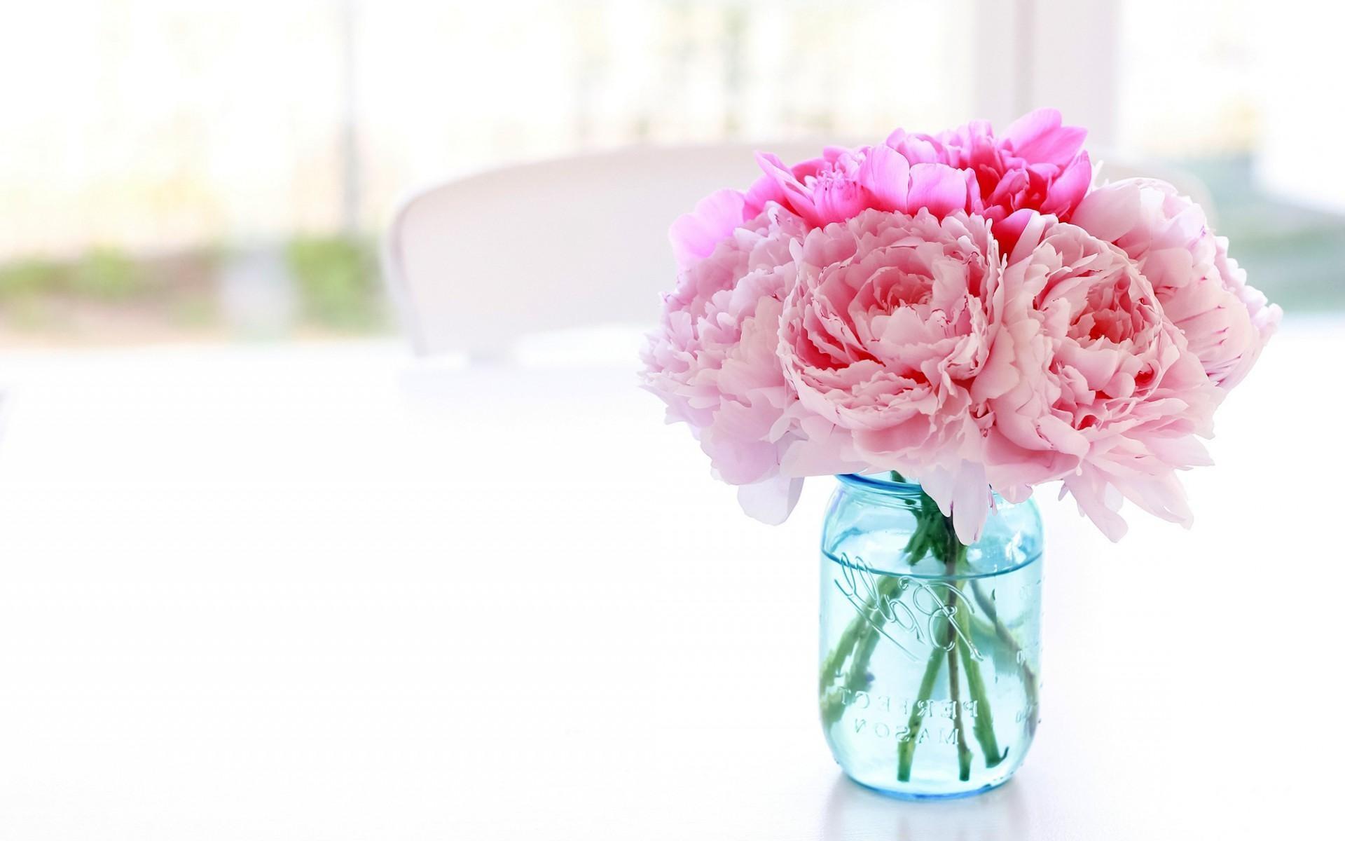 Pink Peony White Background