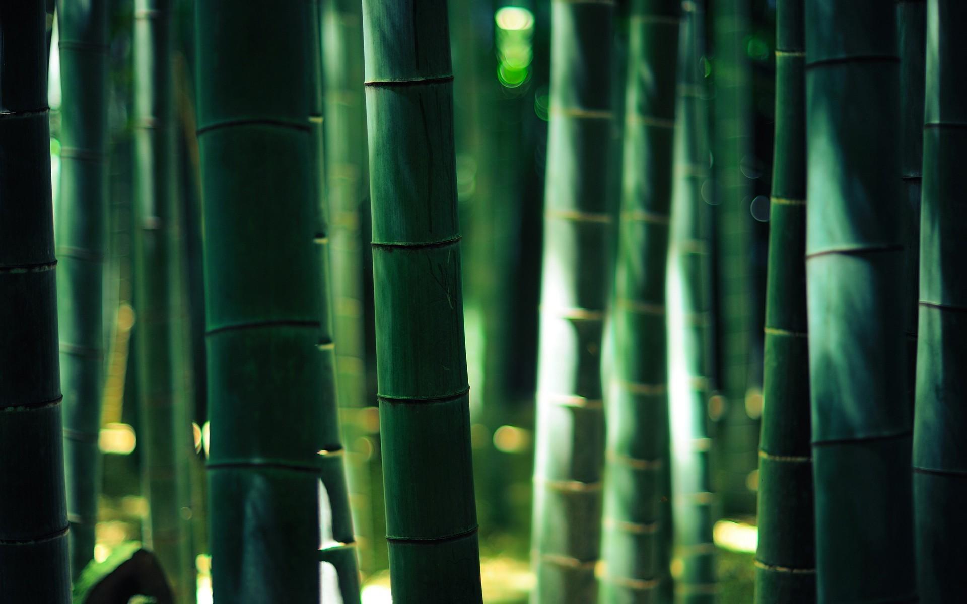 bamboo, Wood, Bokeh, Forest, Gold, Lights Wallpaper HD
