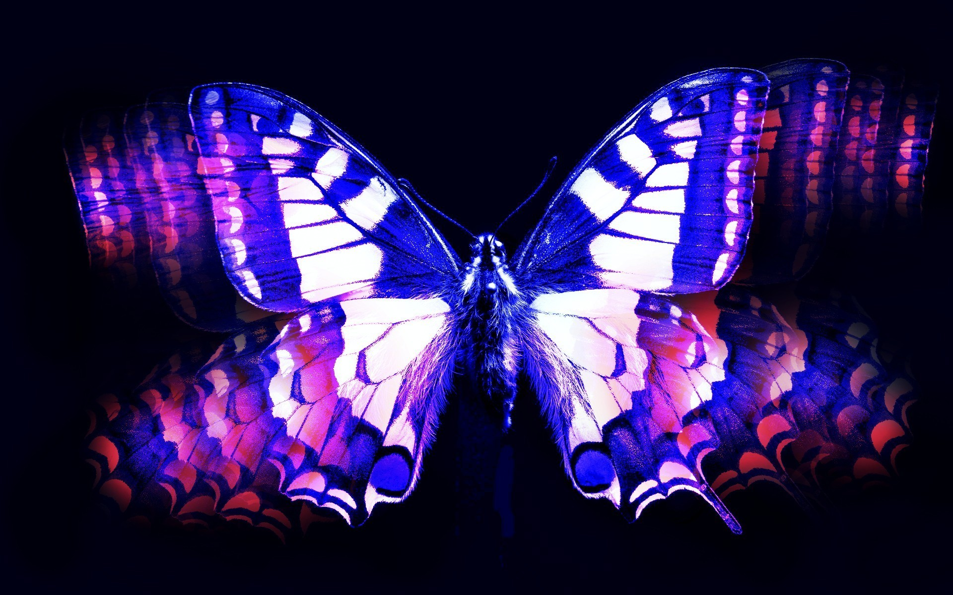 Blue and pink butterfly wallpaper