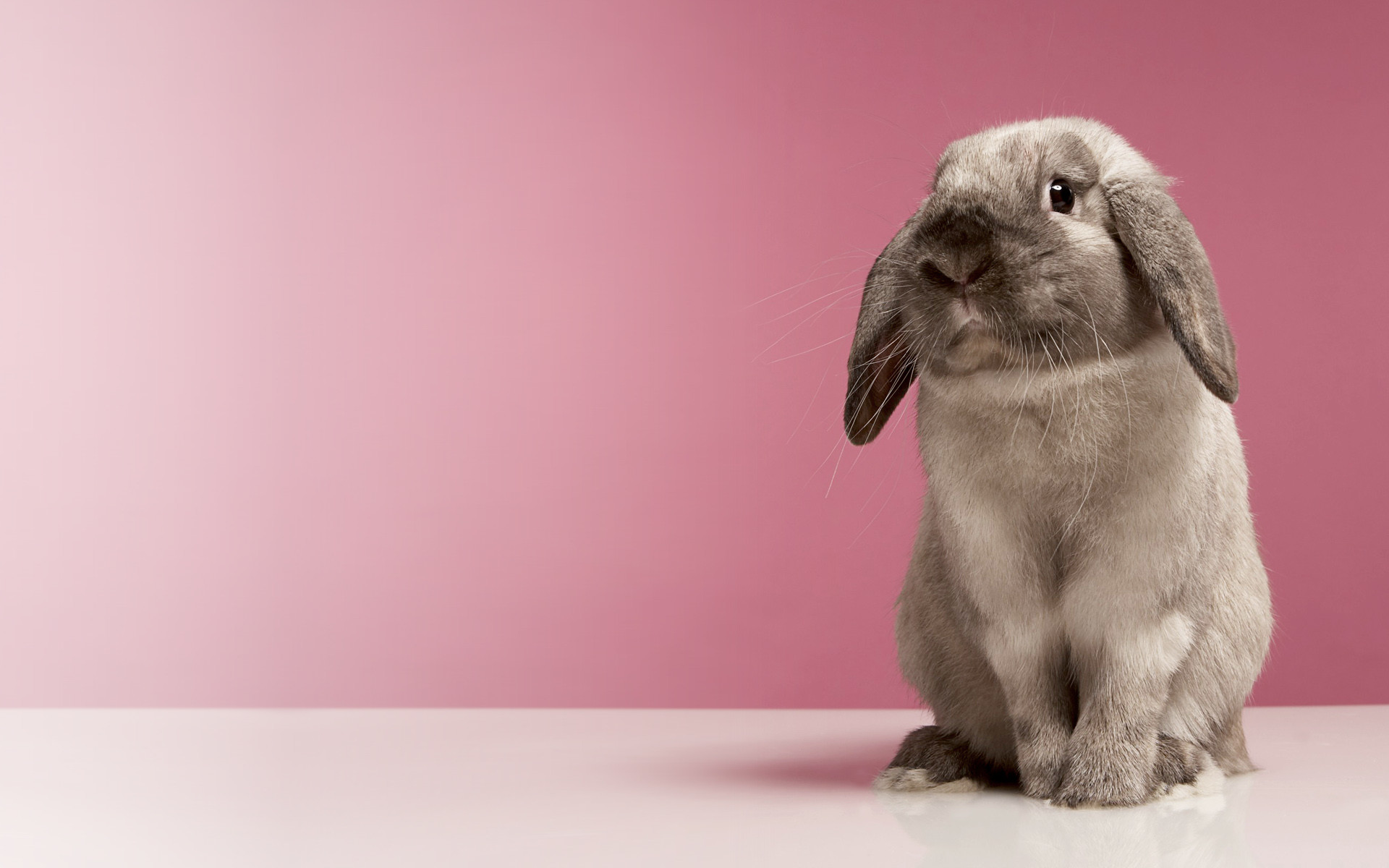 Chinese New Year images bunnies HD wallpaper and background photos