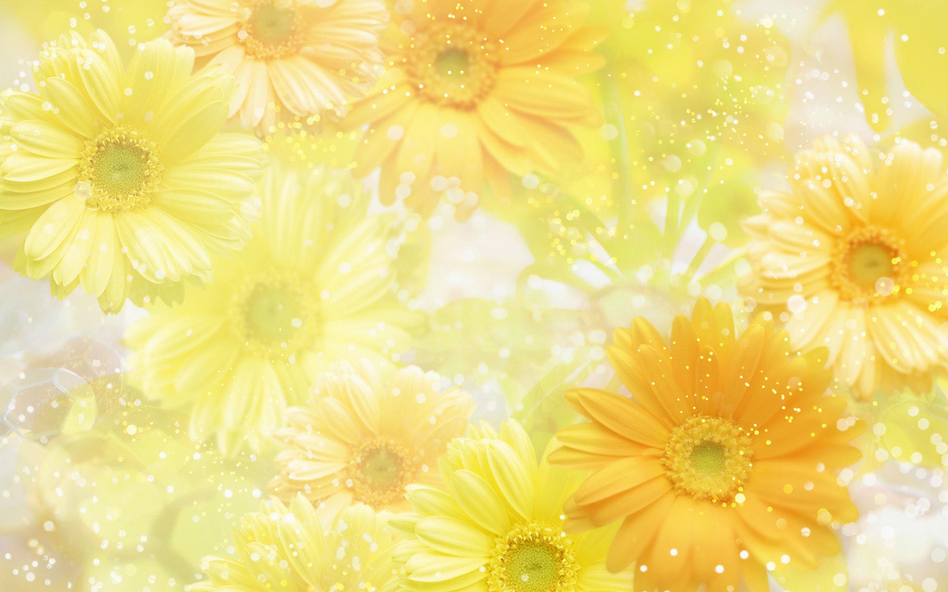 Image for Flowers background Flower wallpaper images of flower 11
