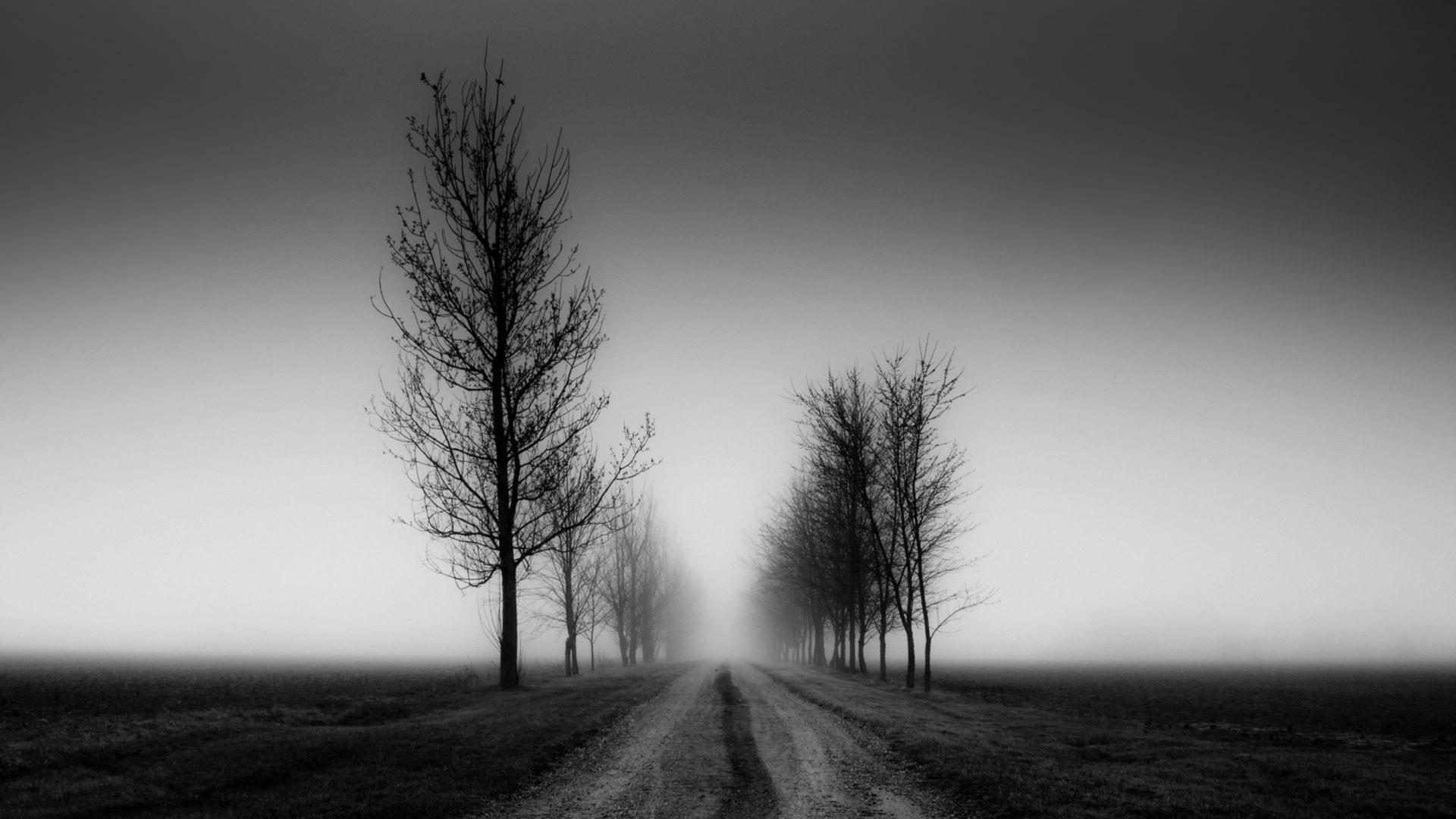 Black And White Photography Nature Wallpaper Widescreen 2 HD Wallpapers