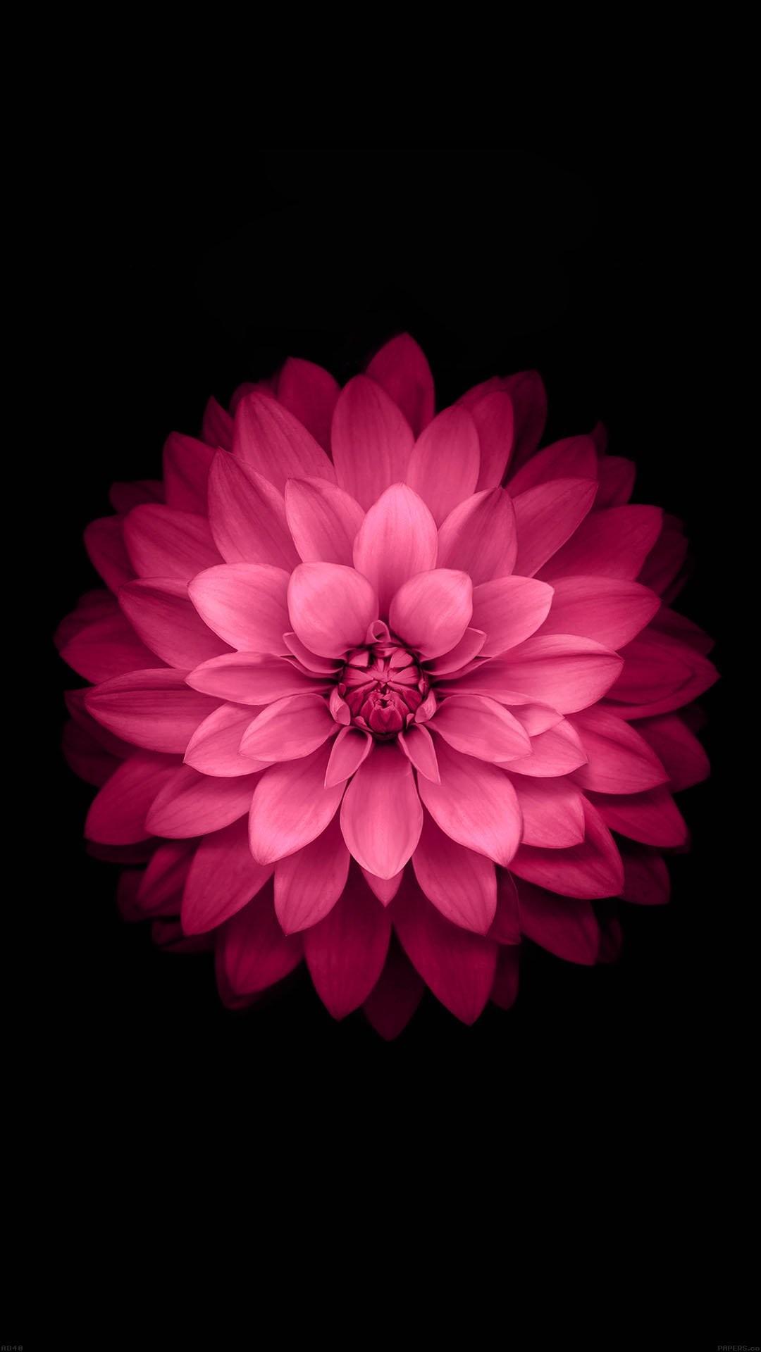 apple red lotus iphone6 plus ios8 flower iphone 7 wallpaper …