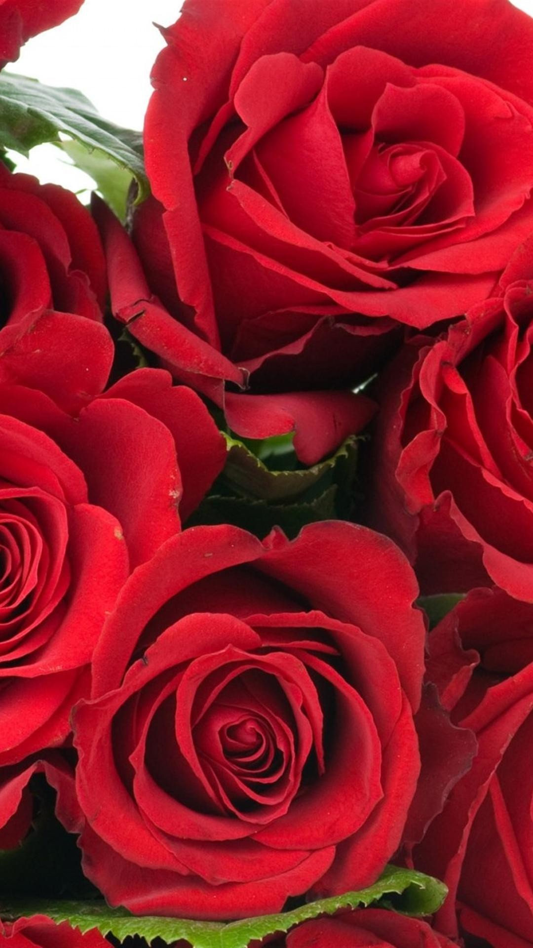 roses flowers bouquet bright red beauty iphone 6 plus wallpapers