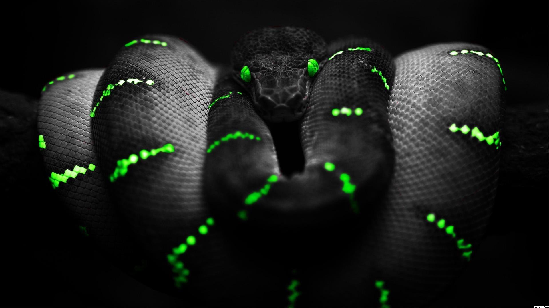 Black-Snake-Background-Wallpaper.jpg