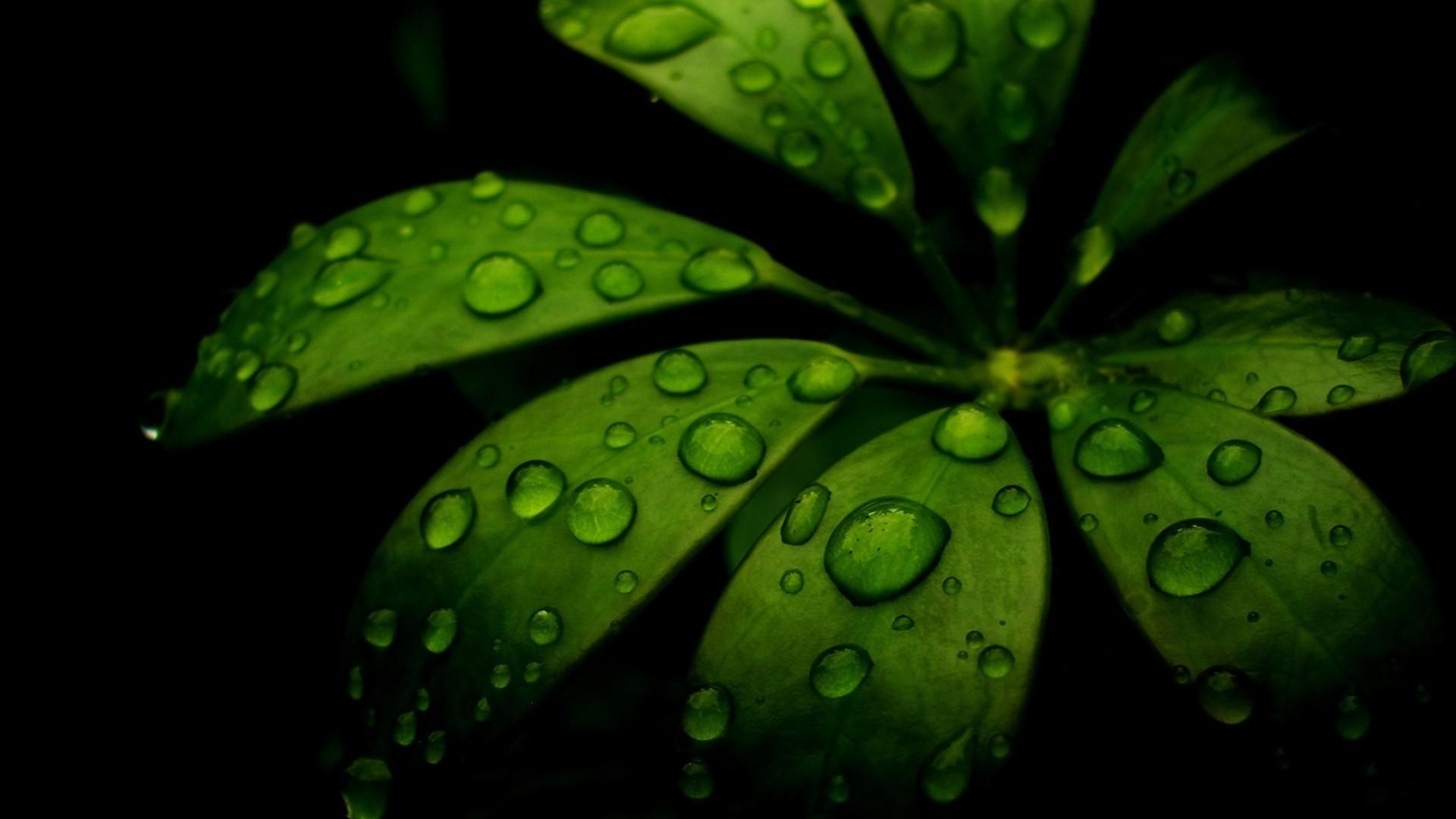 leaf, green, black