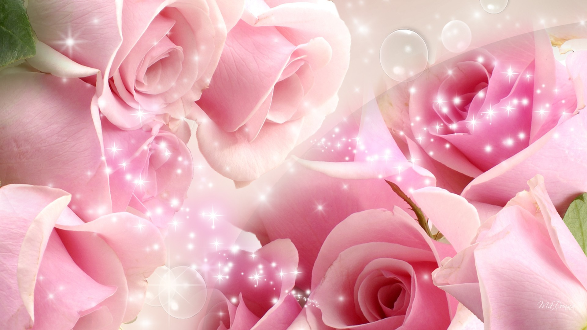 Pink Roses Best Picture Wallpaper