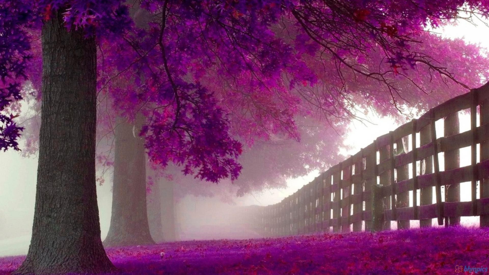 Purple HD Wallpapers – Wallpaper Cave