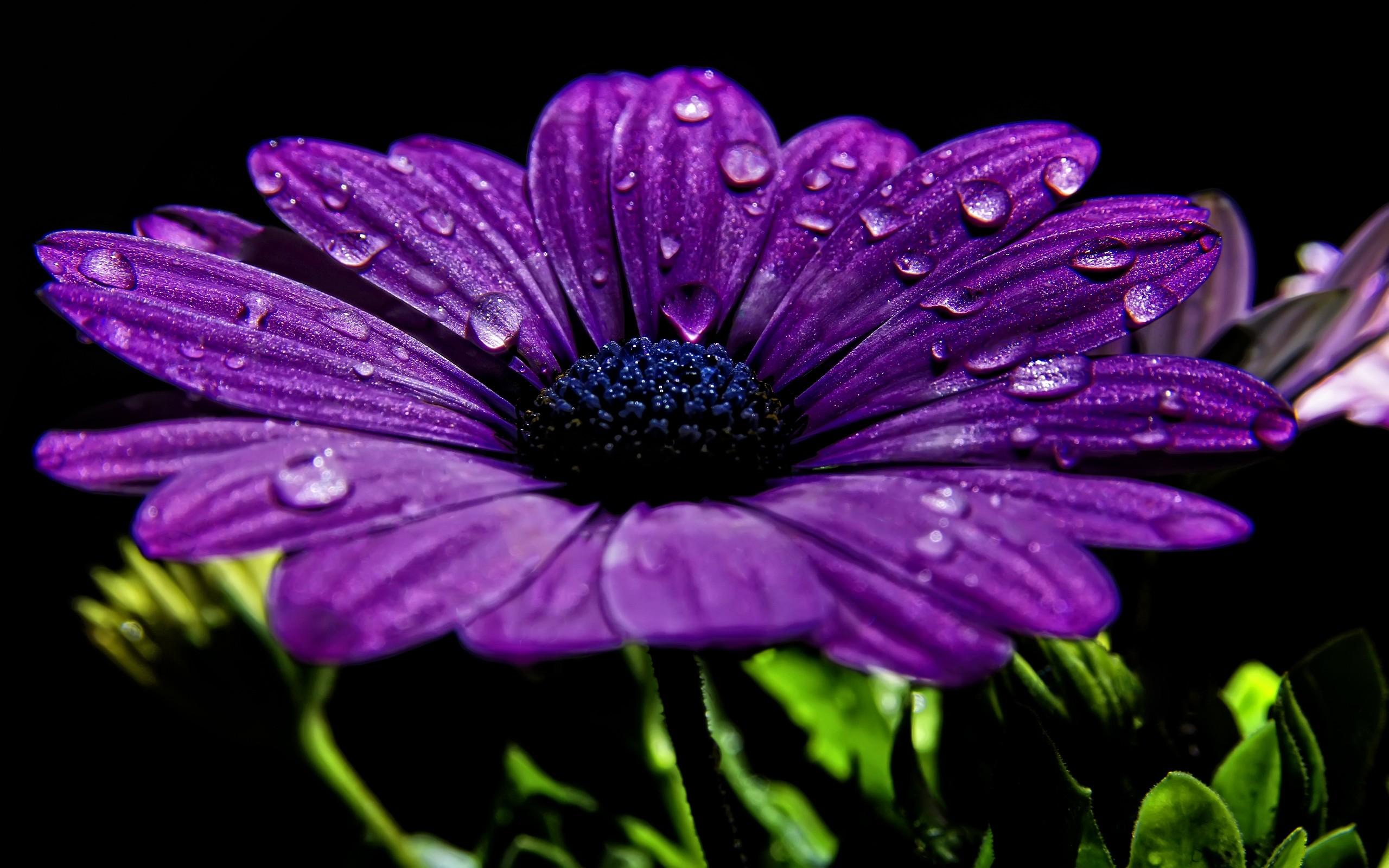 Amazing Purple Flowers Wallpaper
