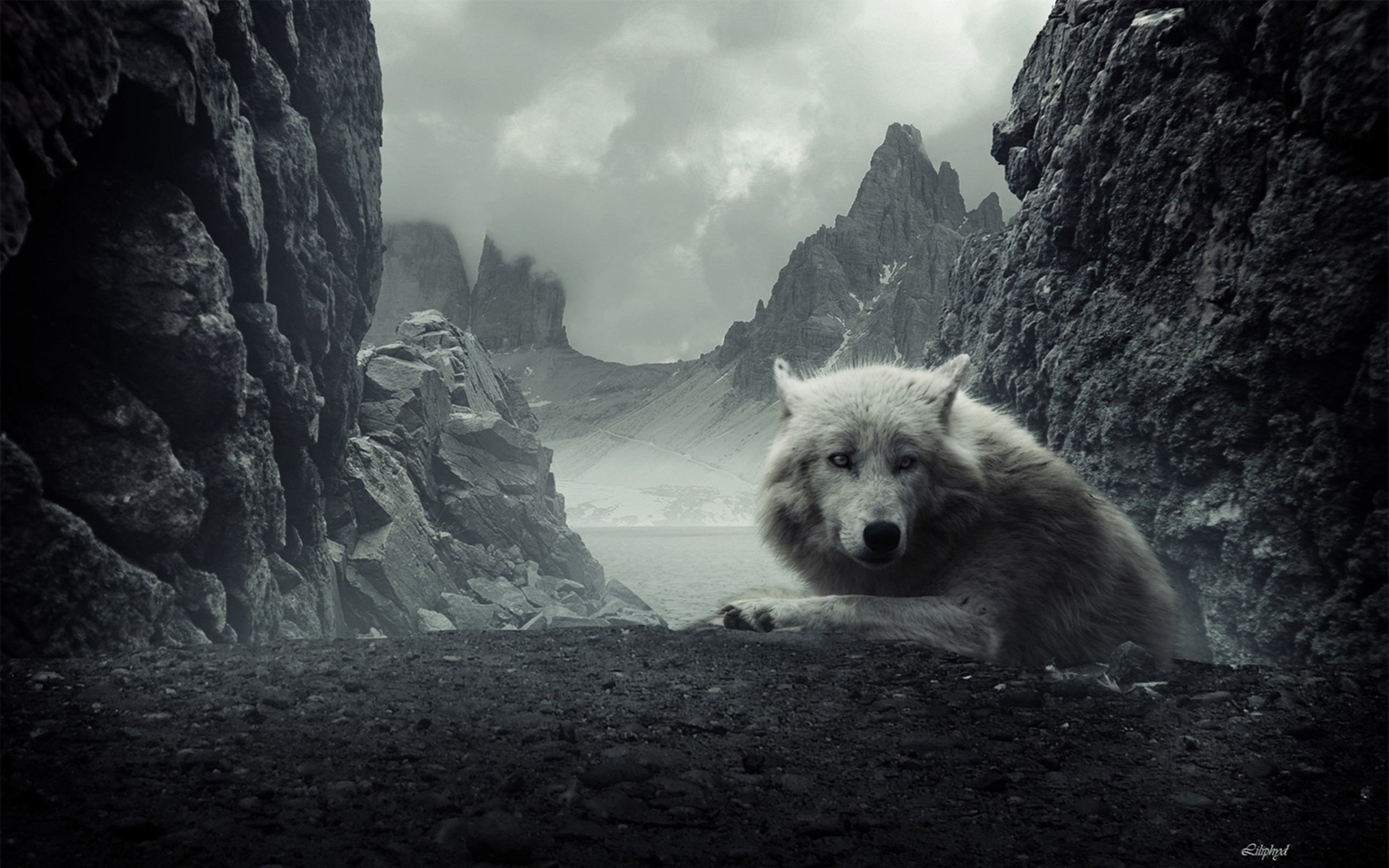 Animal – wolf Wallpapers and Backgrounds
