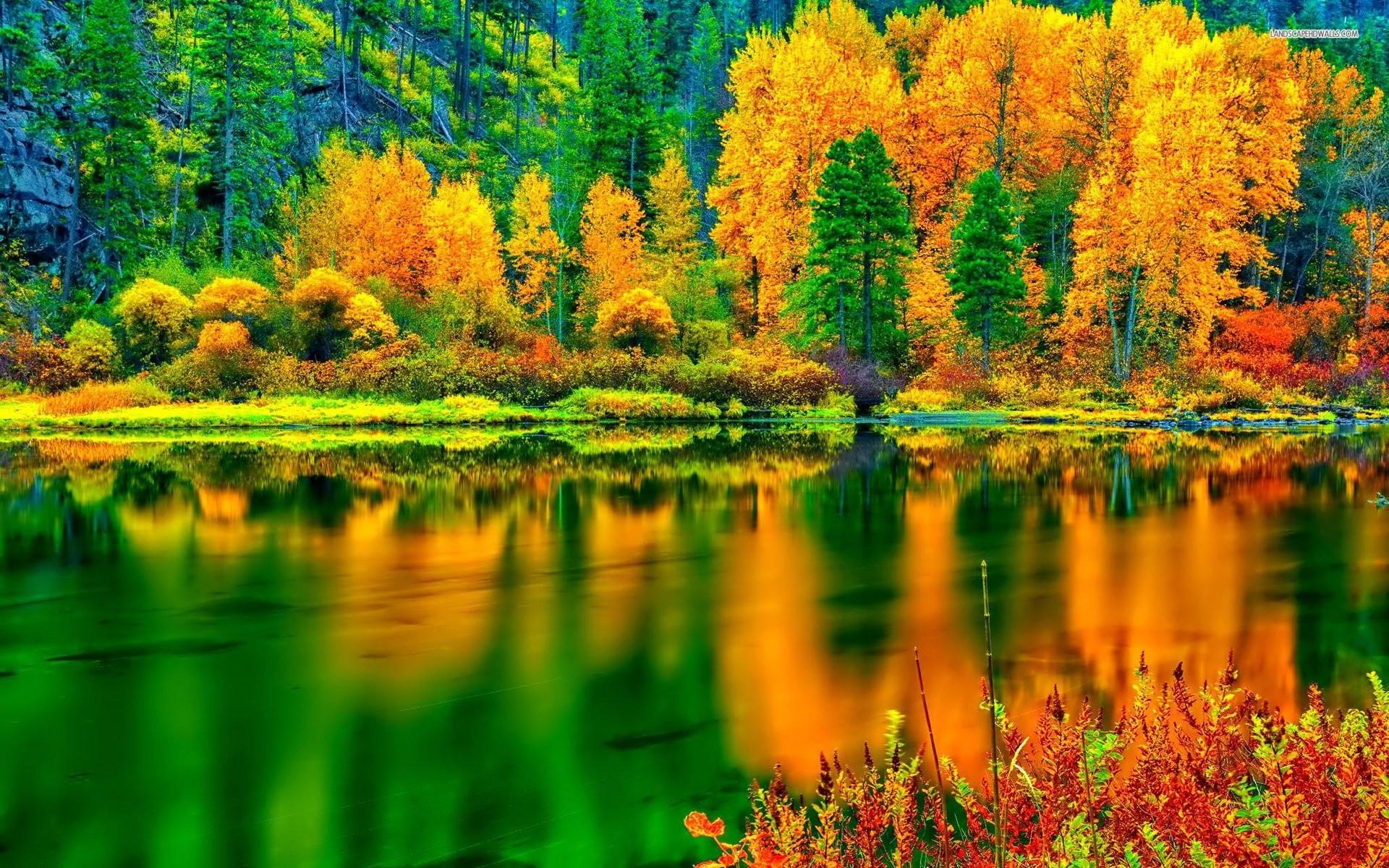 Orange Amd Green Autumn In The Forest