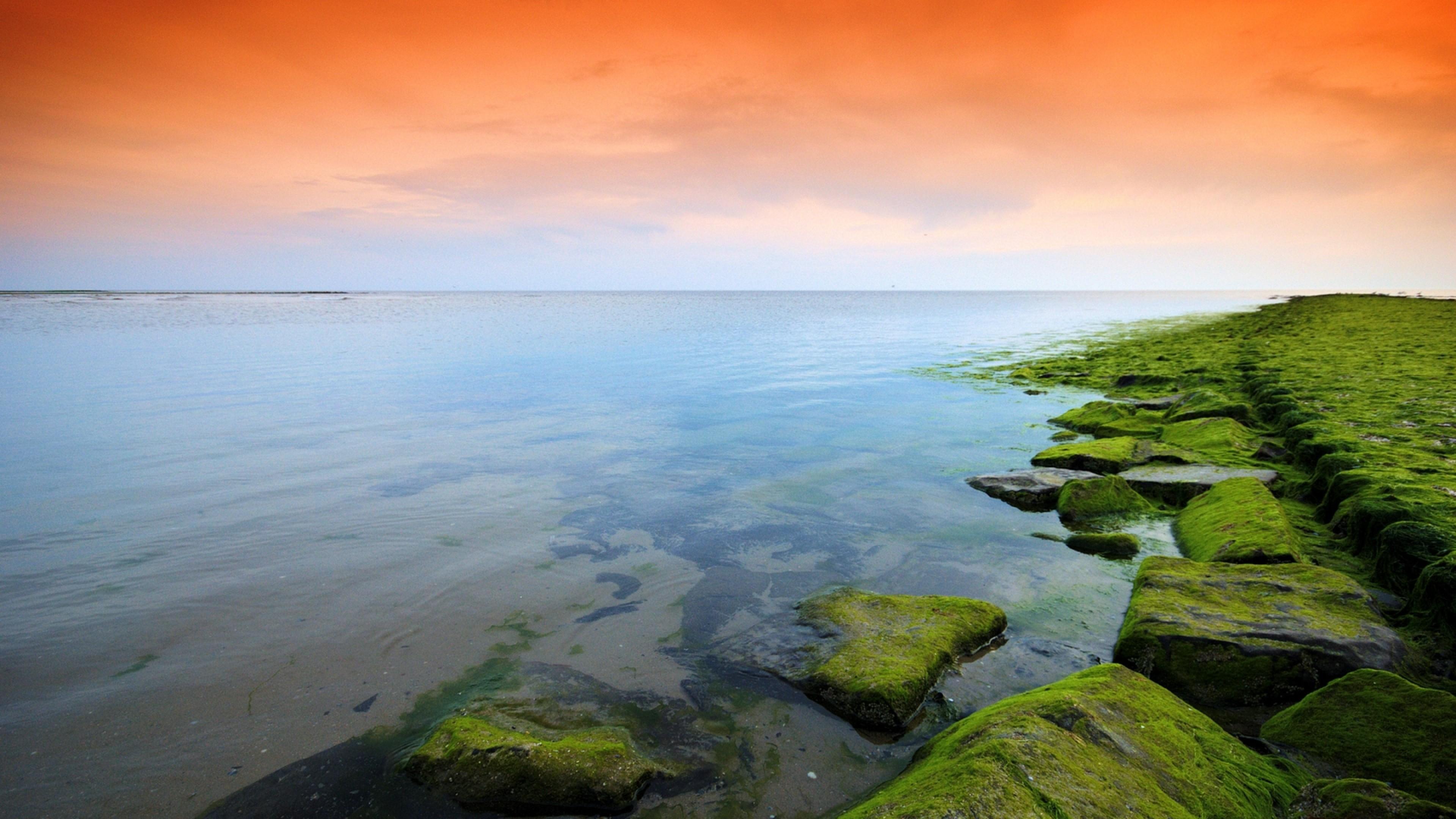Preview wallpaper green, orange, moss, lake, evening 3840×2160