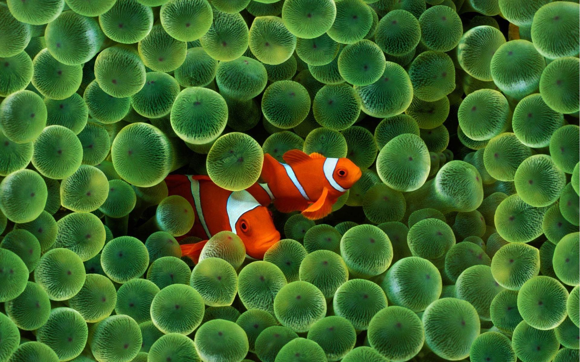 … Orange fish in green…. by jamalaftab