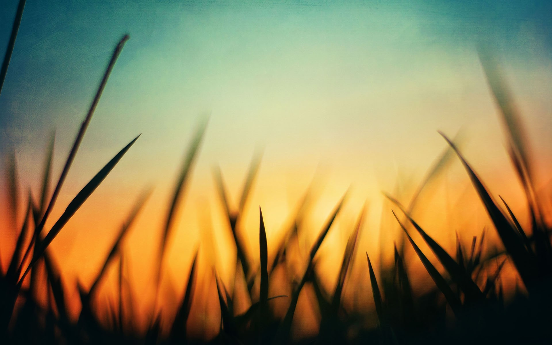 nature, Grass, Green, Sunset, Orange, Blue, Macro, Silhouette Wallpapers HD  / Desktop and Mobile Backgrounds