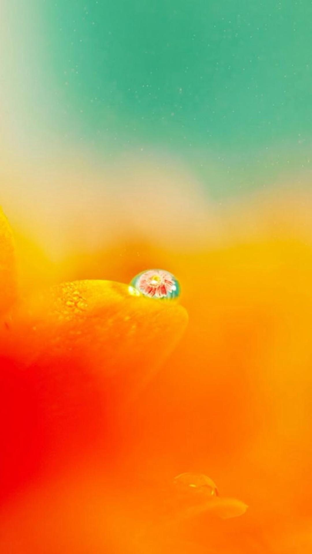 Nature Blurry Pure Orange Flower Petal Dew Waterdrop iPhone 8 wallpaper