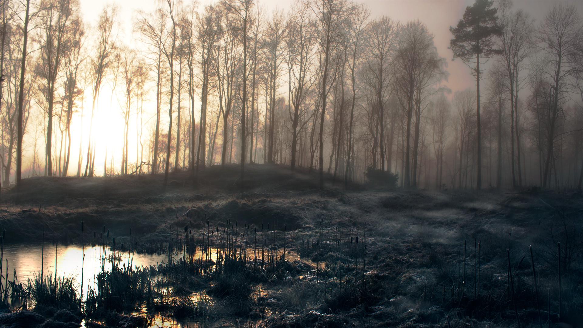 swamp-hd-33792-34553-hd-wallpapers.jpg.png