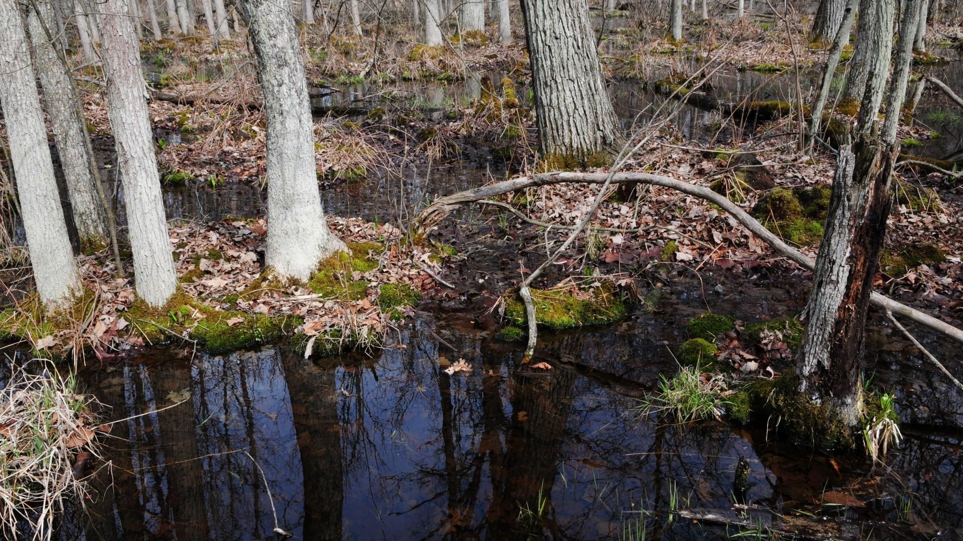 free screensaver wallpapers for swamp