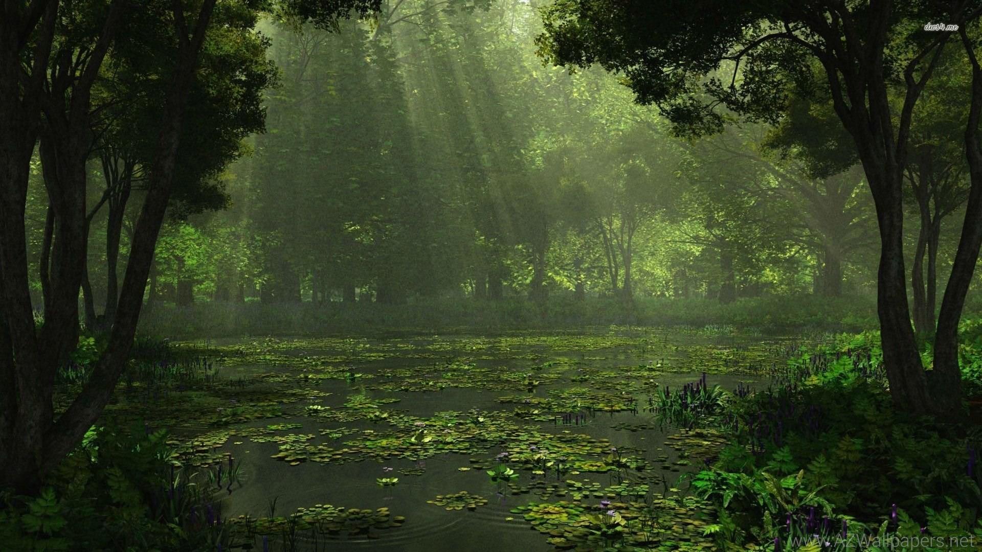 Louisiana <b>Swamp Wallpaper</b> – WallpaperSafari