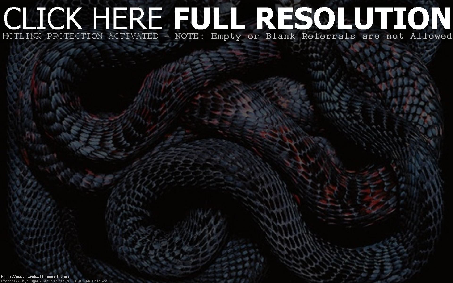 Top Most Wonderful Snake Wallpapers In HD 1024×768 Snake Image Wallpapers  (44 Wallpapers