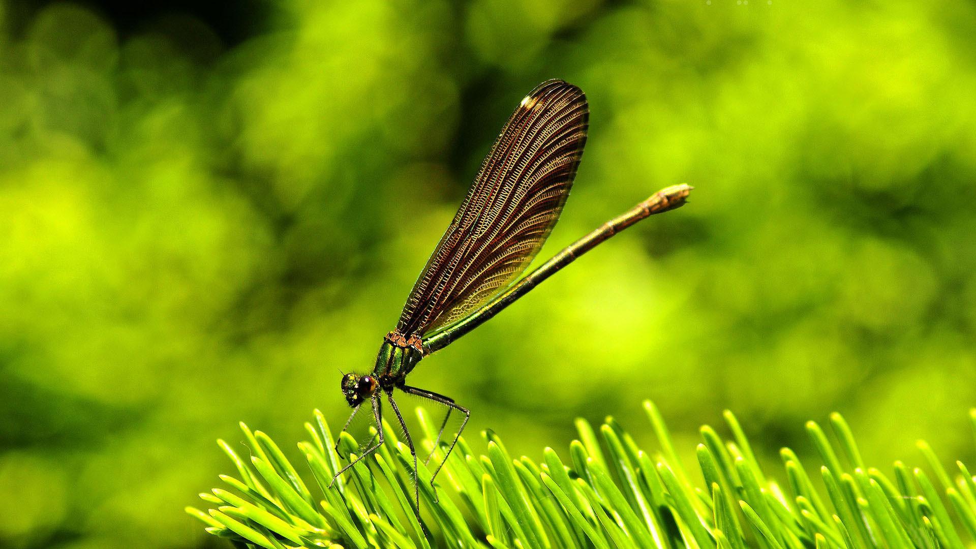hd pics photos best beautiful dragon fly macro nature hd quality desktop  background wallpaper