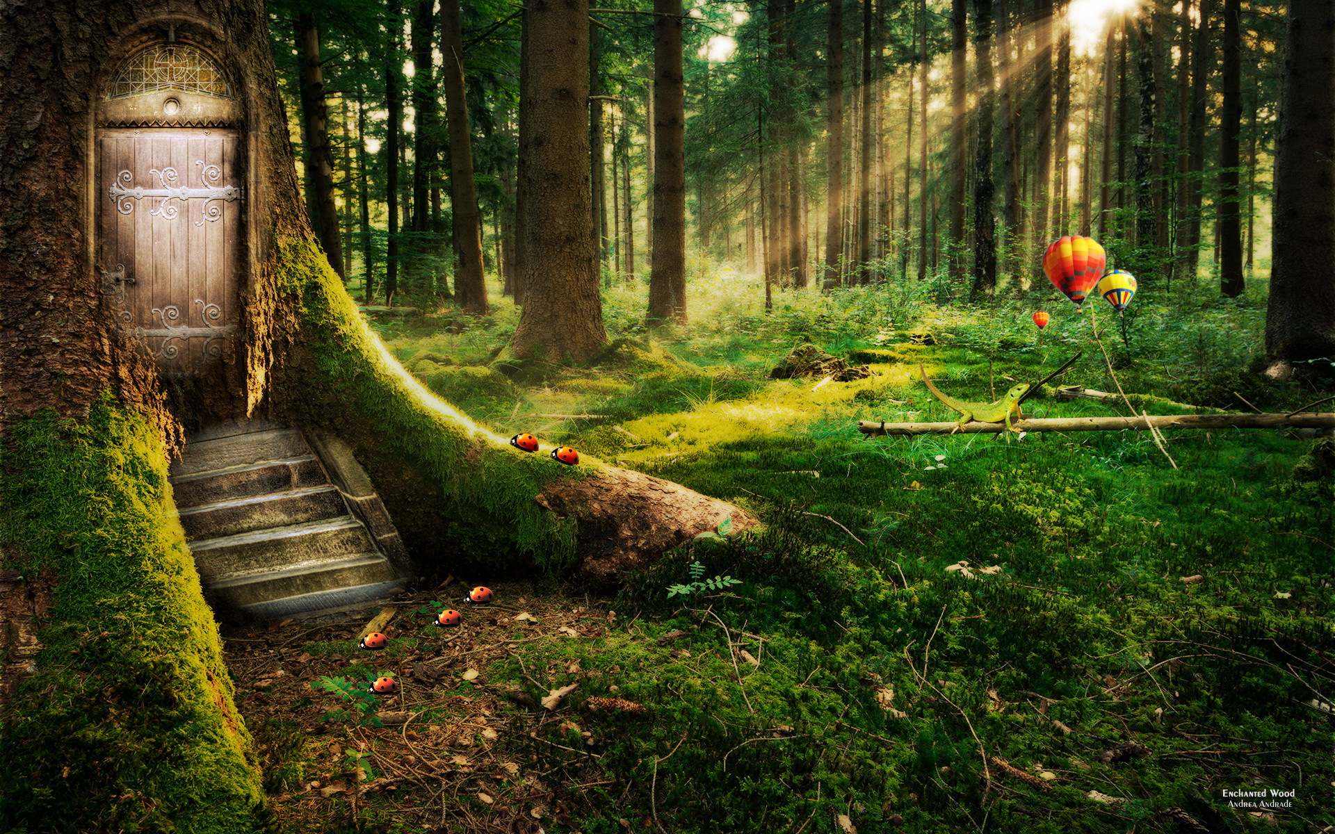 enchanted forest   Tree With a Door Enchanted Forest Hd wallpaper – HD  Wallpapers