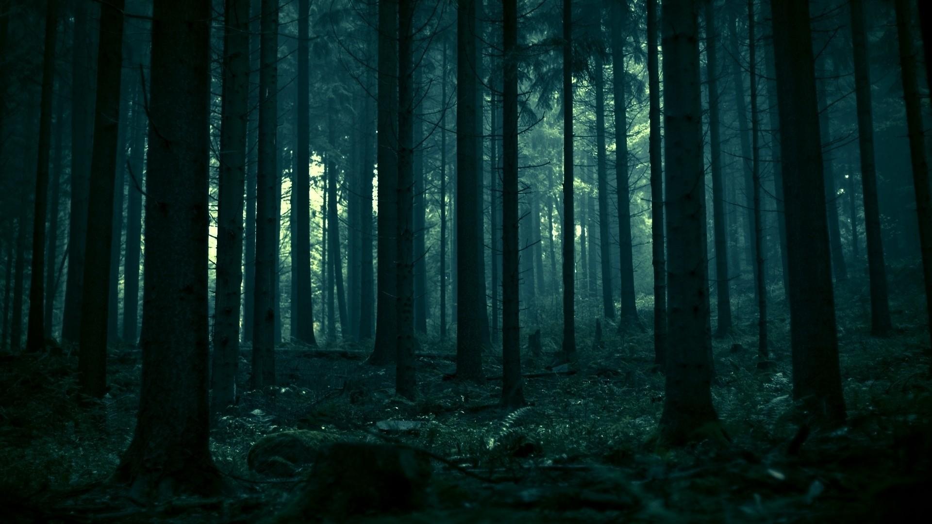 dark forest 12902 wallpapers hd ref- background tenebroso
