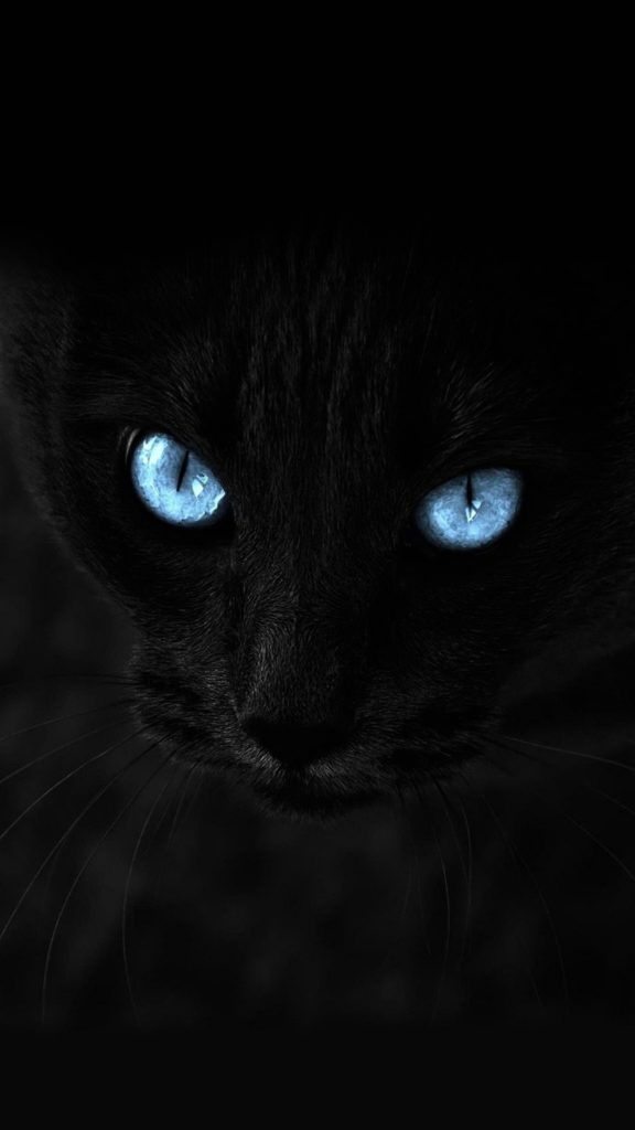 Wallpaper iphone 6 plus cat blue eyes 5 5 inches