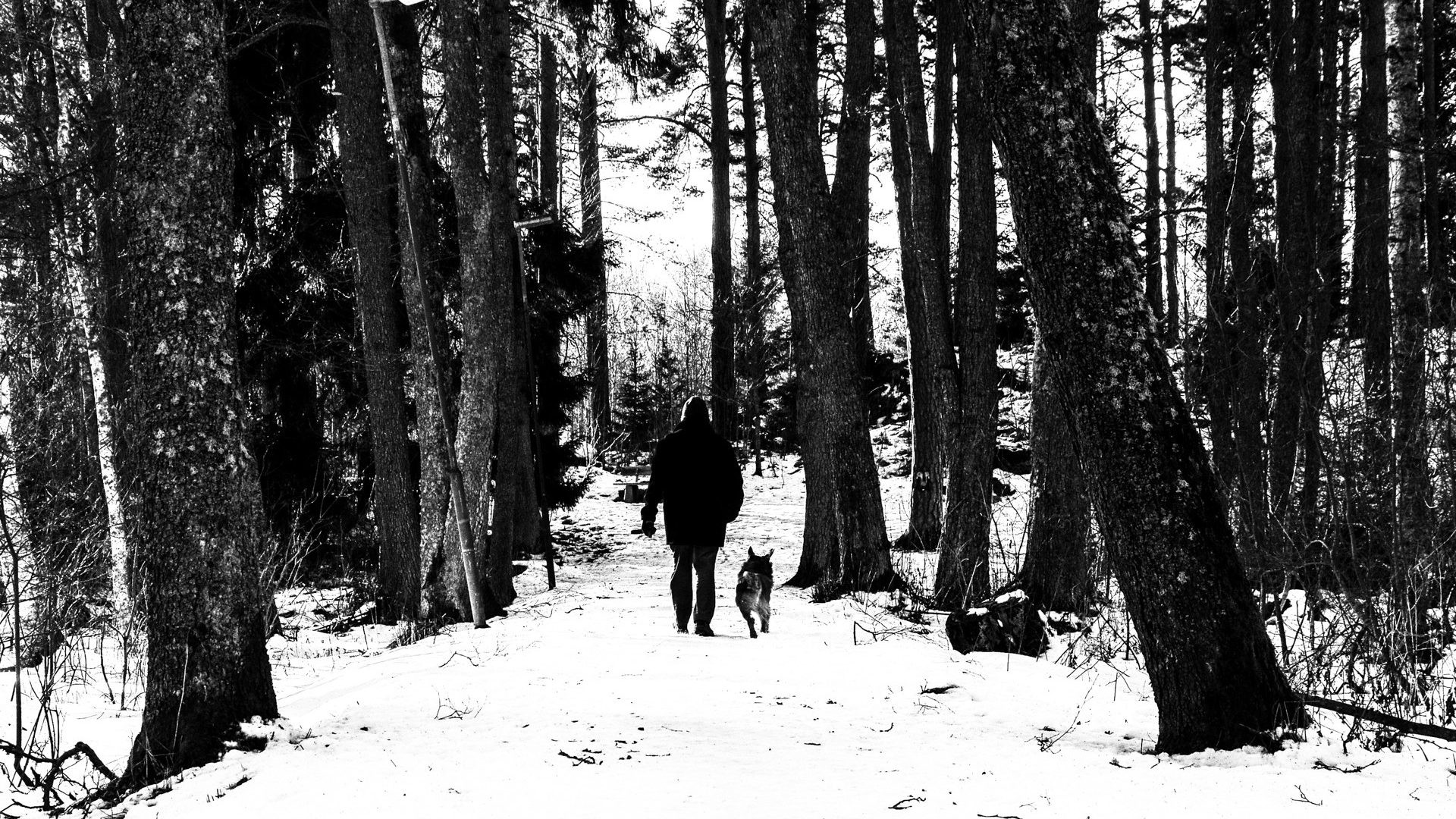 Dog Tag – Snow WalkerZ Walkers Winter Day Walking Walk Jungle Man Dog Walker  HD Wallpapers