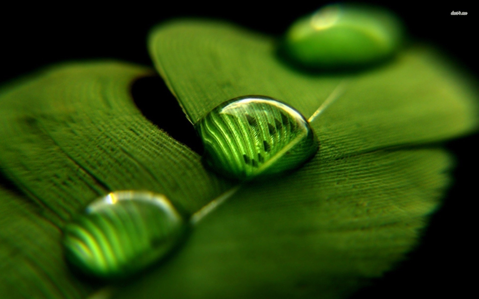 Cute Water Drops Leaf Wallpaper – Live Wallpaper HD