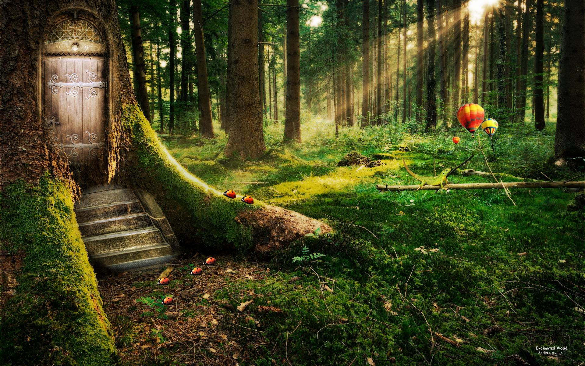 Enchanted Forest Wallpapers | HD Wallpapers