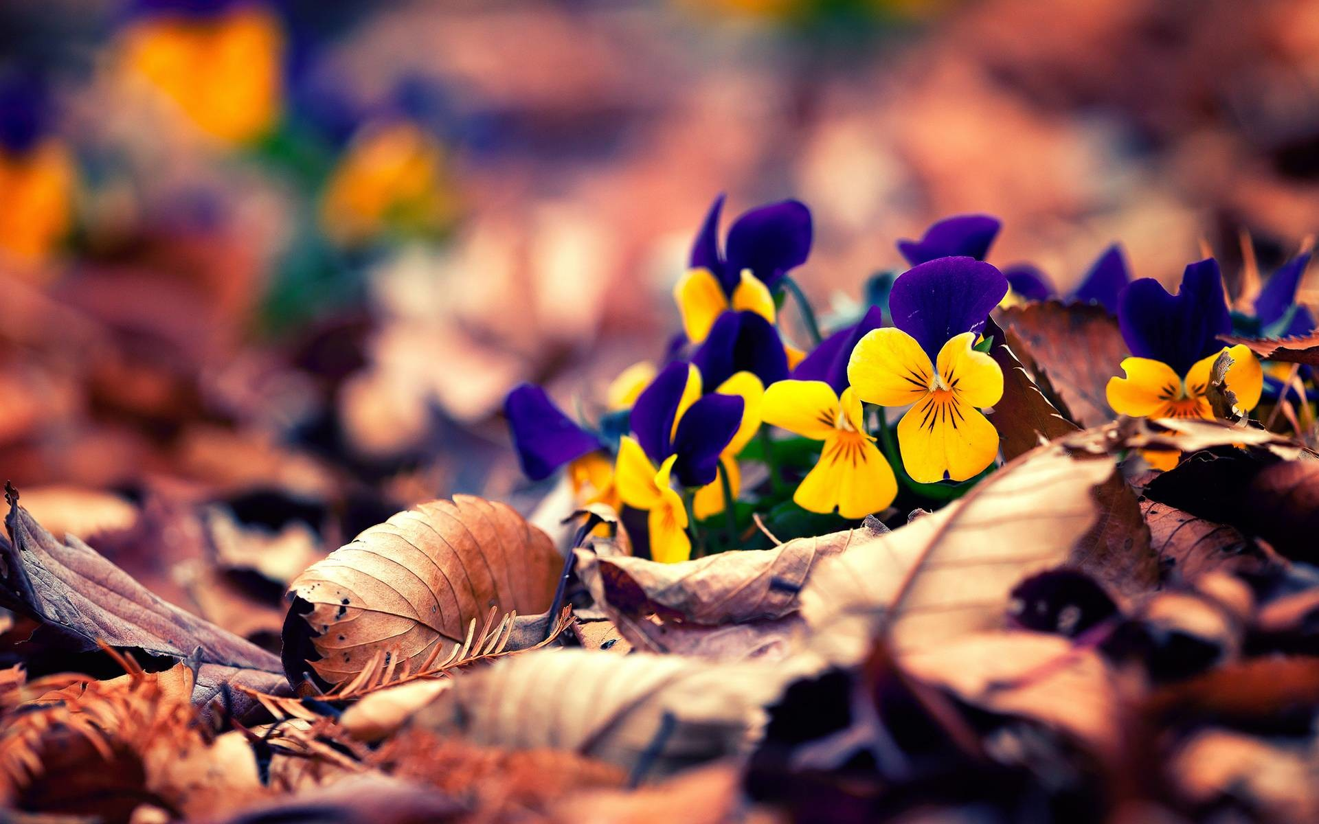 fall flowers background images | walljpeg.