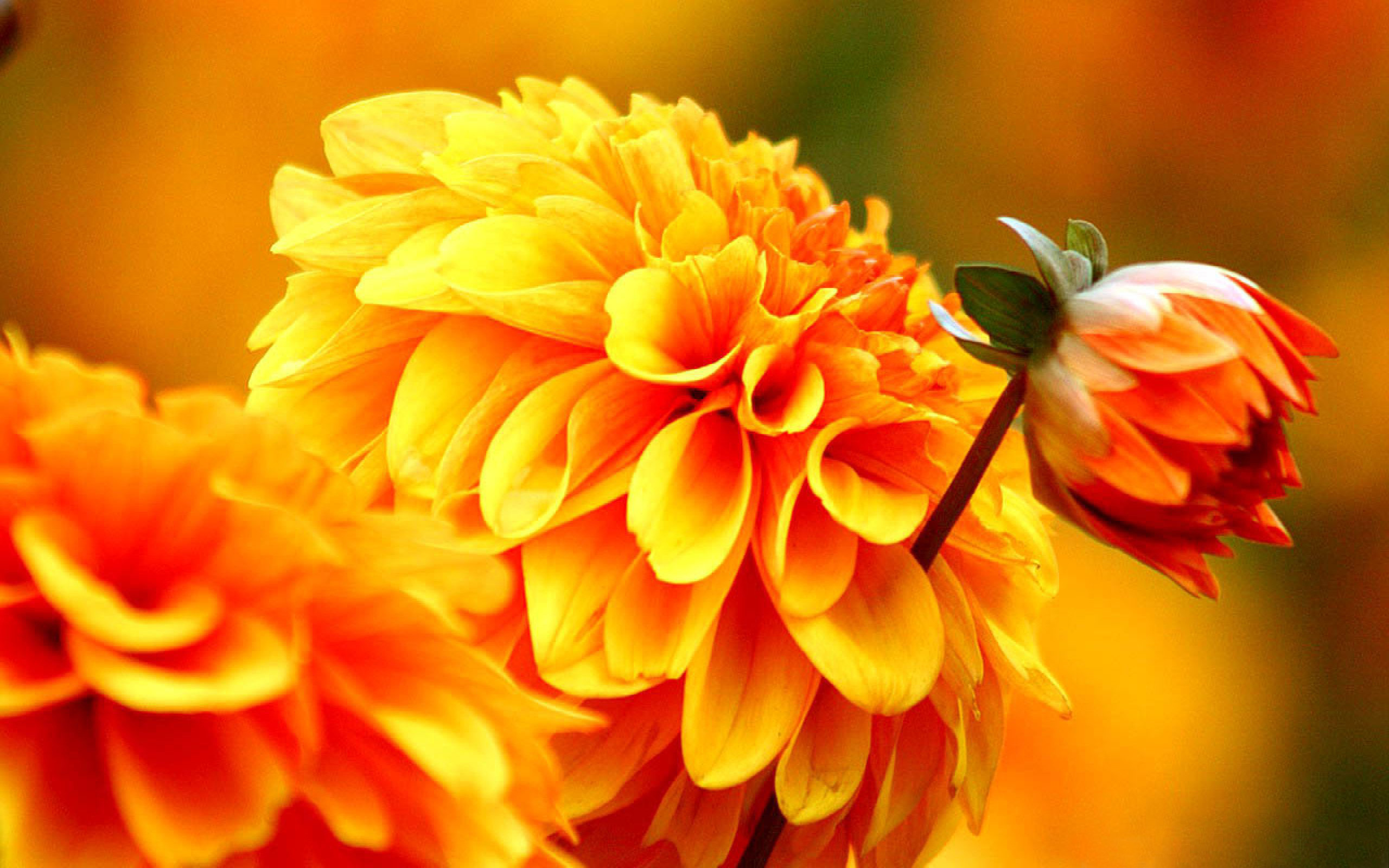 Fall Autumn Flowers Wallpapers