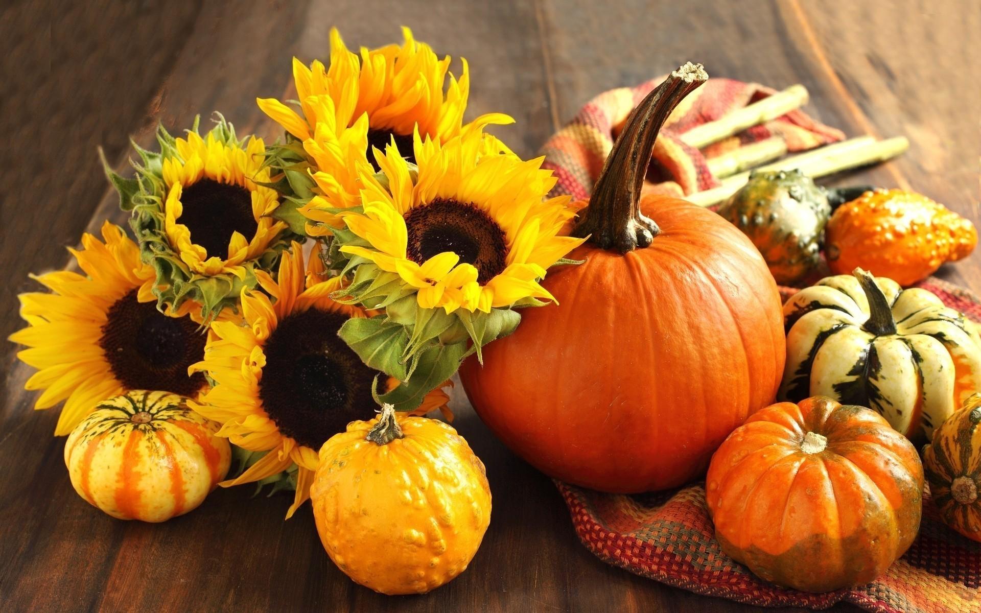 flowers fruits harvest sunflowers pumpkins Squash cloth wallpaper .