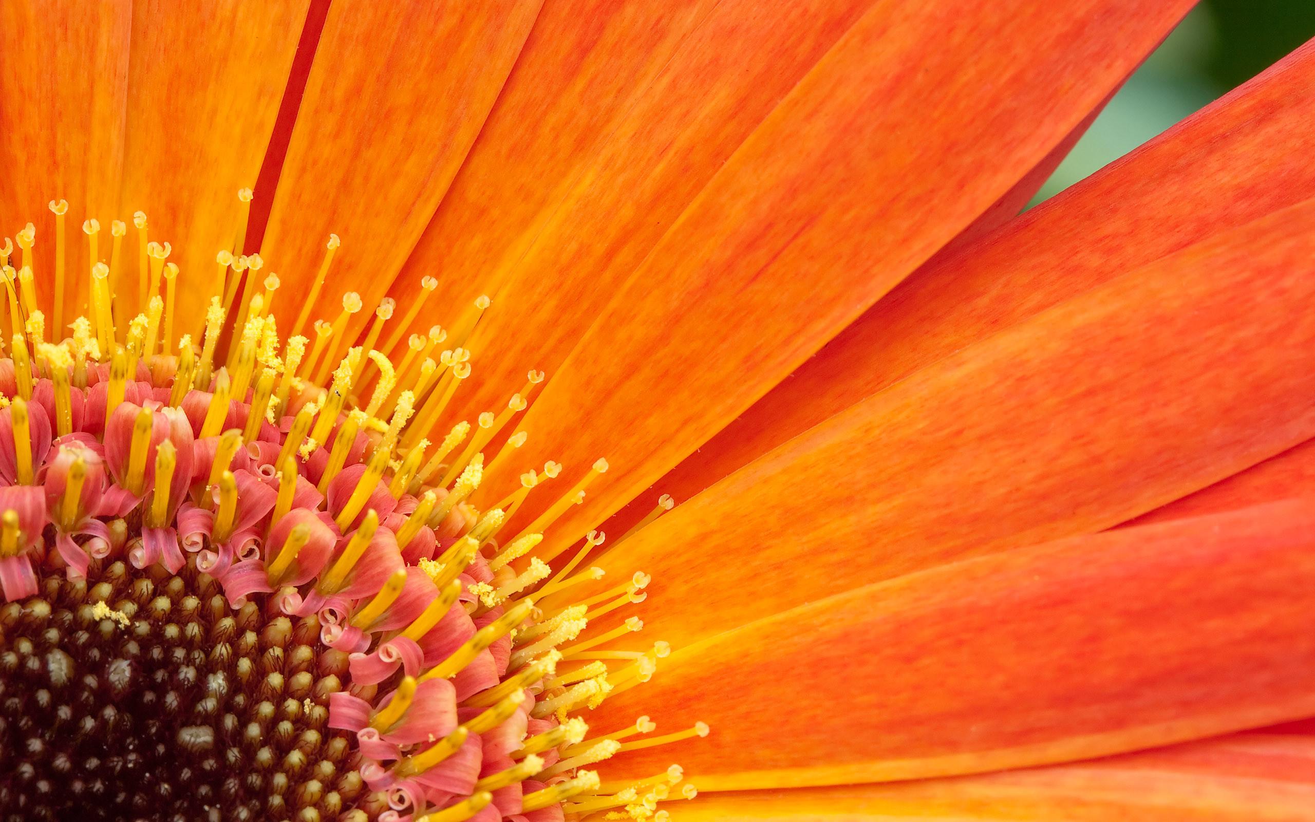 Flower Computer Wallpapers, Desktop Backgrounds | | ID .