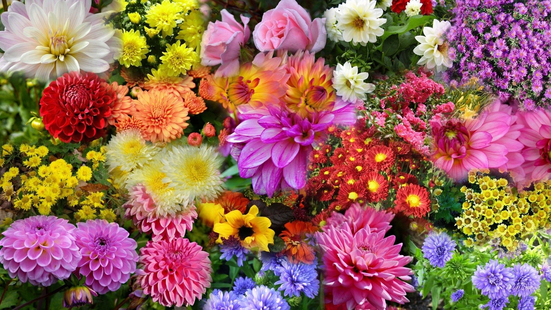 Plenty Tag – Autumn Garden Colorful Flowers Pink Lavender Roses Summer  Collage Fall Red Bright Mums