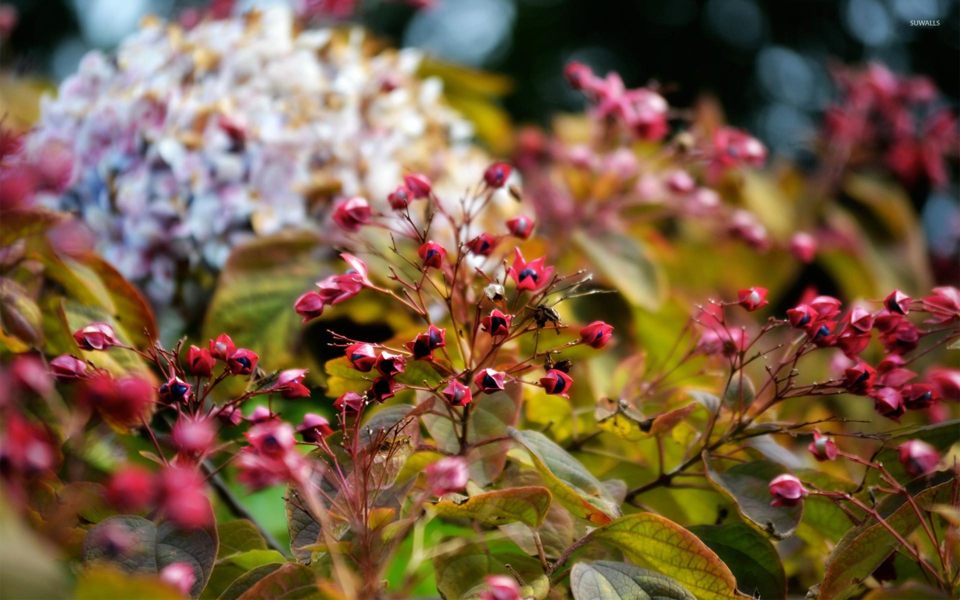 Autumn flowers and berries wallpaper jpg