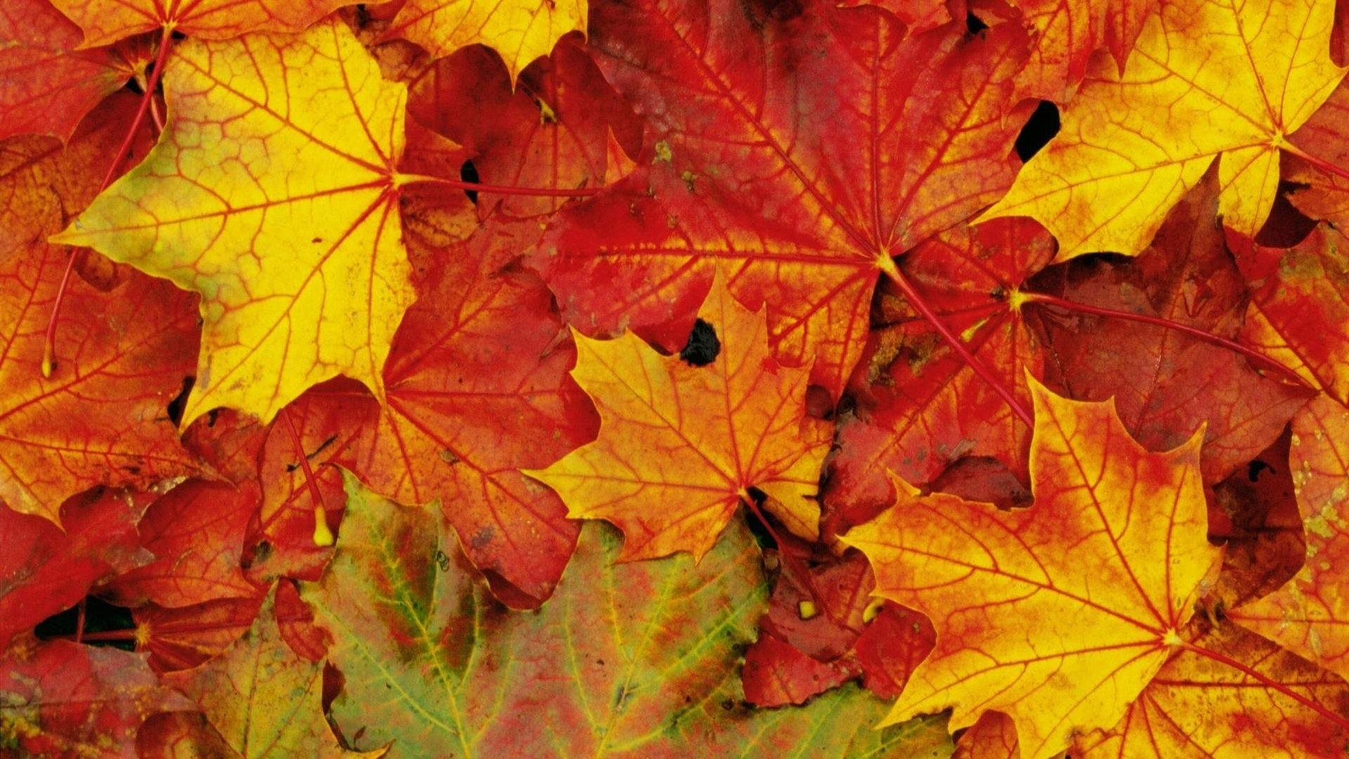 Wallpaper nature flower leave fall flashlight awesome 50
