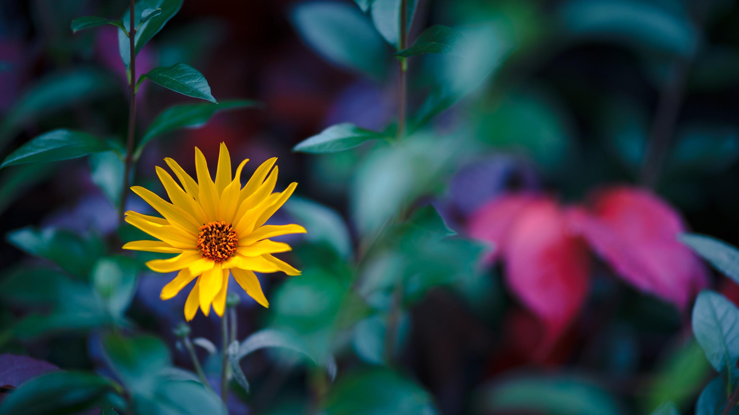 … Fall Flower Wallpaper by Pierre-Lagarde