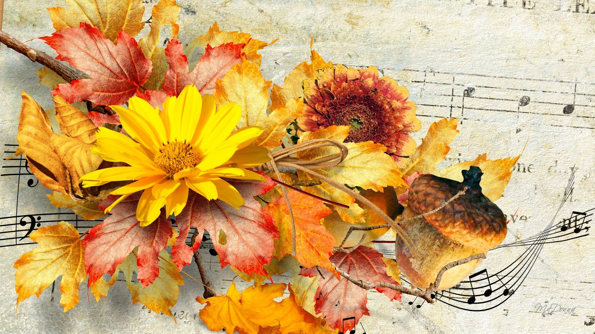 Flowers – Sunflowers Flowers Paper Autumn Fall Music Score Nuts Leaves Wallpaper  Flower Android for HD