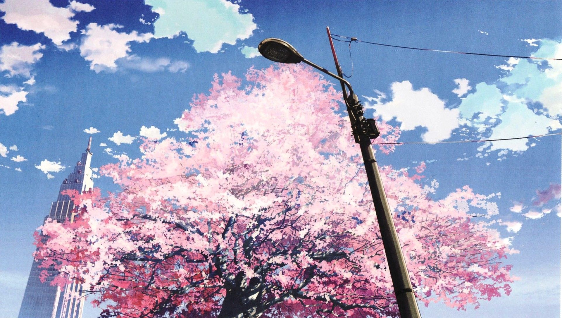 Most Beautiful Cherry Blossom Wallpapers for Free Download 1922×1087 Cherry  Blossom Tree Wallpapers (