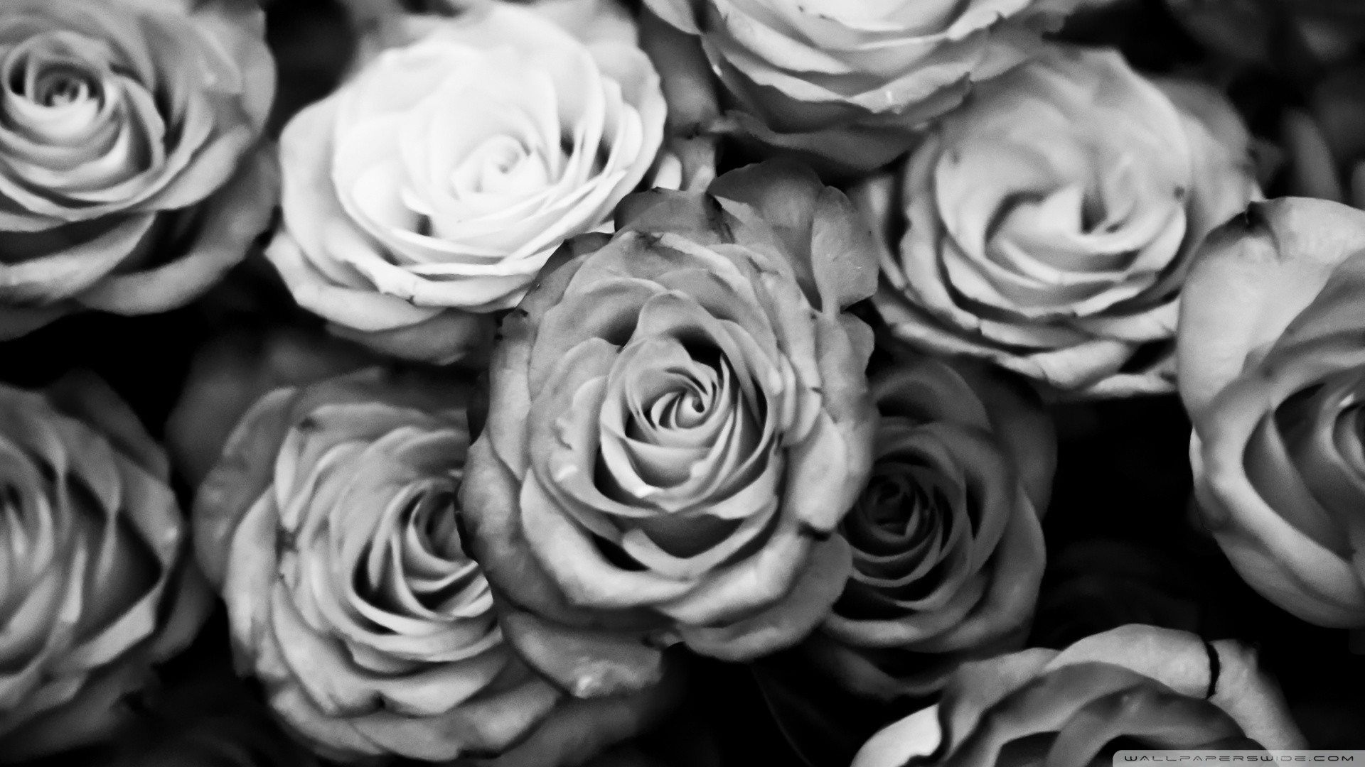 You can download Black And White Roses in your computer by clicking .