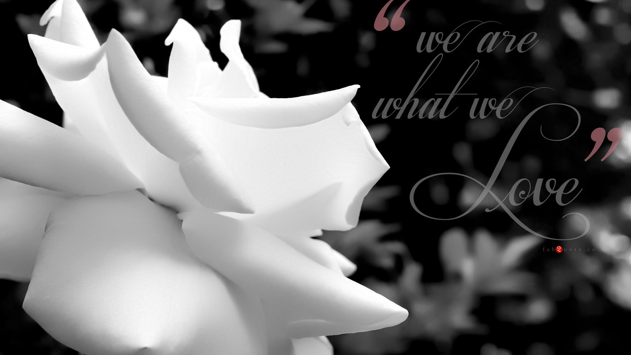 Black And White Rose Wallpaper 7 Widescreen Wallpaper