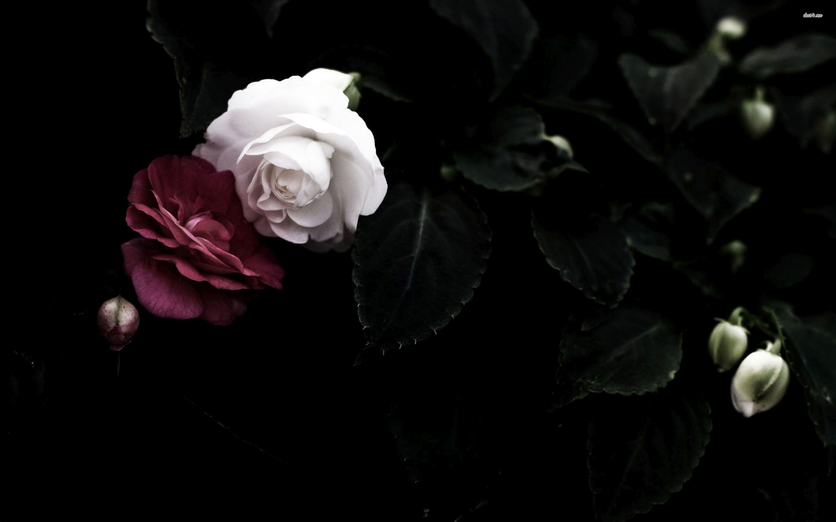 RED AND WHITE ROSES WALLPAPER. Download