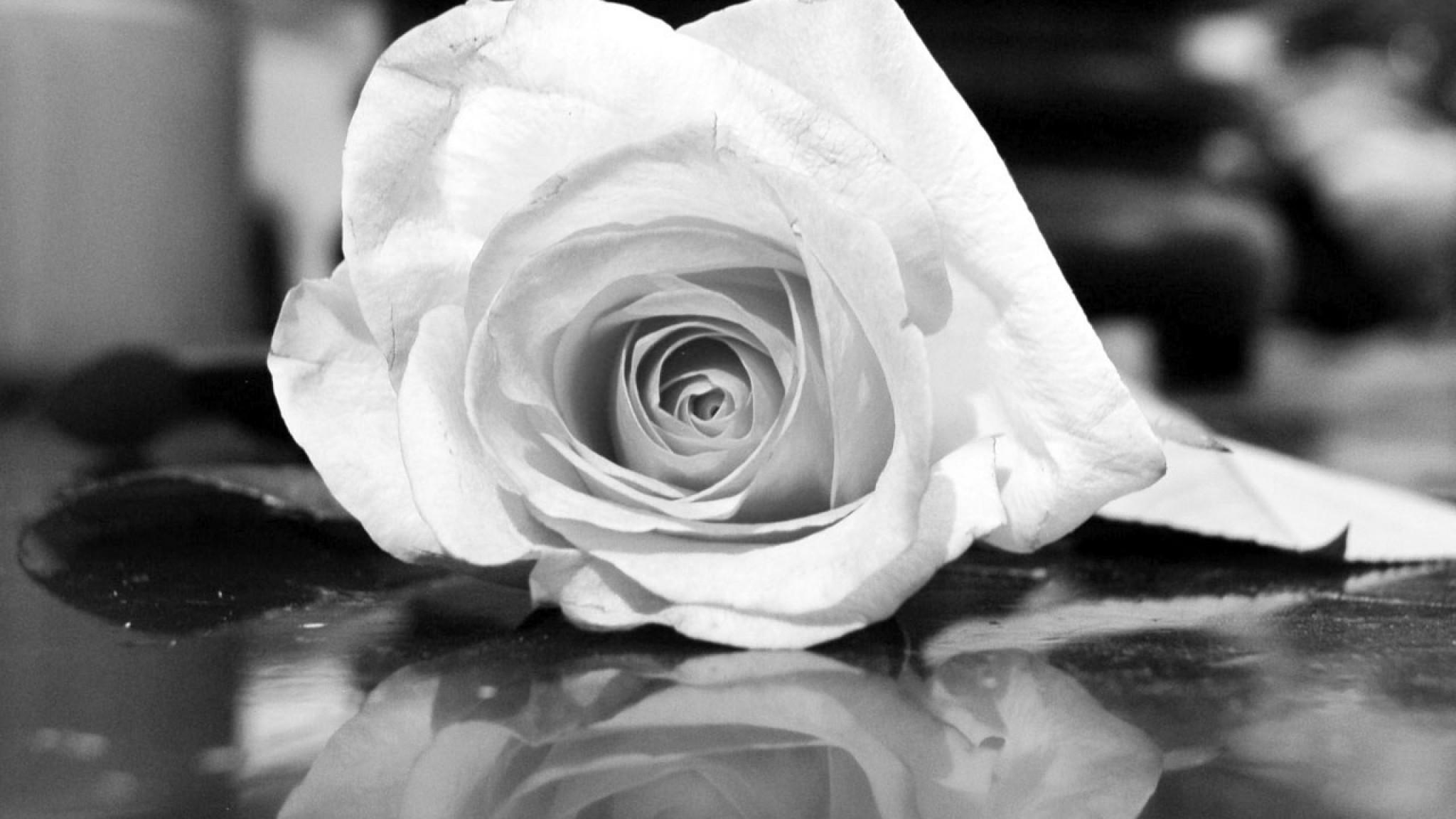 Wallpaper rose, flower, reflection, black white