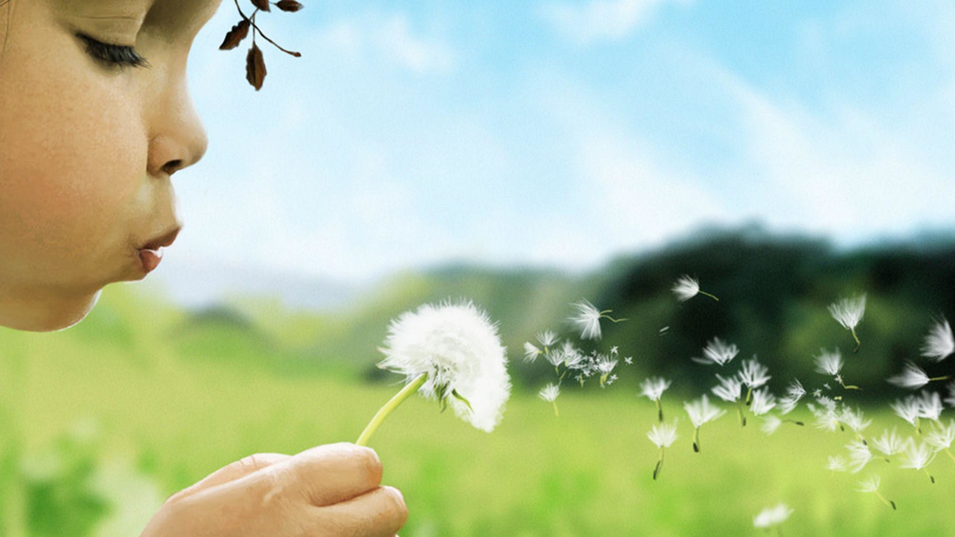 Child Girl Blowing Dandelion (Taraxacum) Flower wallpaper thumb
