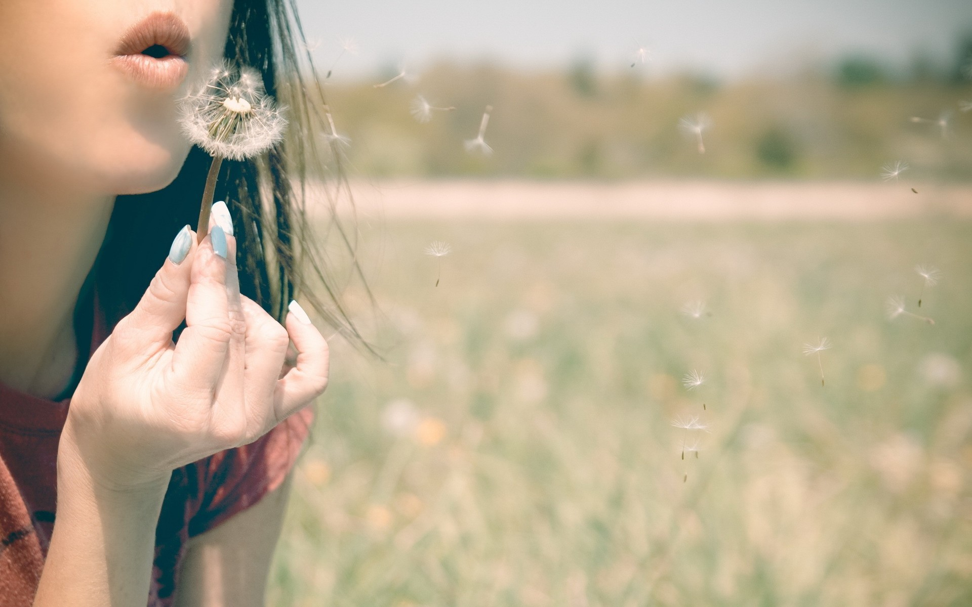 … on the dandelion HD Wallpaper Blowing …