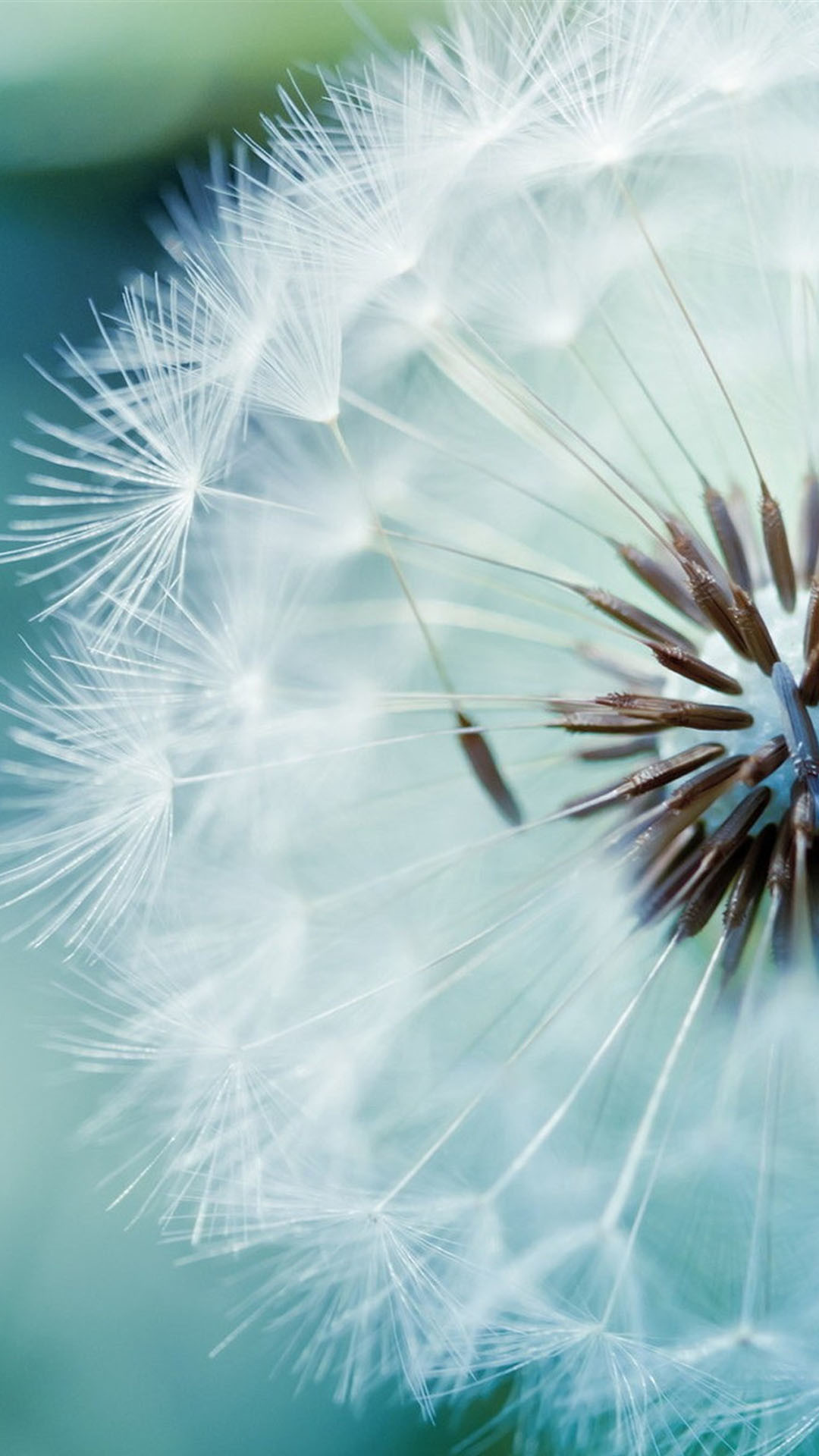 White Dandelion Macro iPhone 6 Plus HD Wallpaper.jpg 1,080×1,920 pixels